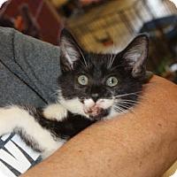Adopt A Pet :: Gabby - Louisville, KY