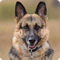 Adopt A Pet :: Cherish - Dacula, GA