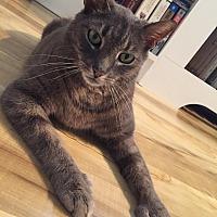 Adopt A Pet :: SAMUEL/ playful, affectionate - Bryn Mawr, PA