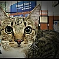 Adopt A Pet :: Sarah - Greensboro, NC