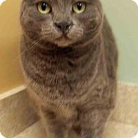Adopt A Pet :: Finnie - Oswego, IL