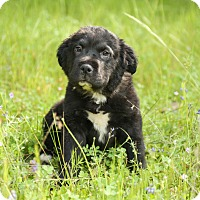 Adopt A Pet :: Sarah - Auburn, CA