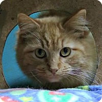 Adopt A Pet :: Kerrigan - West Des Moines, IA