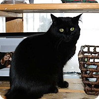 Adopt A Pet :: Fuzzy - Lindsay, ON