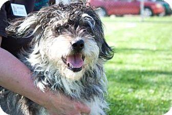 German Shepherd Dog/Bichon Frise Mix Dog for adoption in Novelty, Ohio - Hamilton