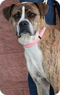 Boxer Mix Dog for adoption in Palmdale, California - Asia