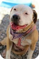 Terrier (Unknown Type, Medium) Mix Dog for adoption in Tinton Falls, New Jersey - Sasha