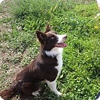Adopt A Pet :: Sly - Glenrock, WY