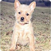Adopt A Pet :: Sadie - Haverhill, MA