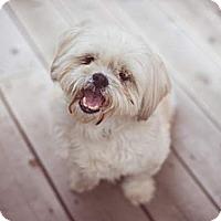 Adopt A Pet :: Wilma - Toronto, ON