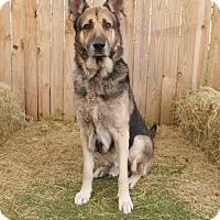 Adopt A Pet :: Phoenix - Inverness, FL