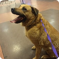 Adopt A Pet :: Maggie - Phoenix, AZ