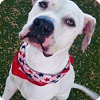 Adopt A Pet :: Marshmallow - Meridian, ID