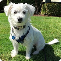 Adopt A Pet :: Huck - Adoption Pending - Gig Harbor, WA