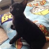 Adopt A Pet :: Treat - McHenry, IL