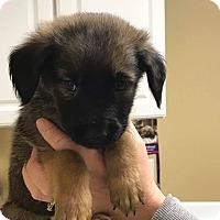 Adopt A Pet :: Pink - Zanesville, OH