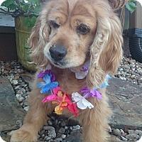 Adopt A Pet :: Naomi - Sugarland, TX