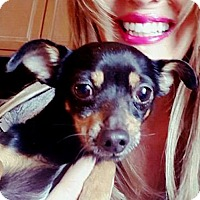 Adopt A Pet :: Campy - Fredericksburg, VA