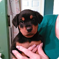 Adopt A Pet :: Darby - Munford, TN