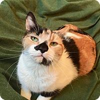 Adopt A Pet :: Cleo - Colmar, PA