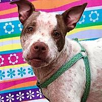Adopt A Pet :: Diamond - Cleveland, OH