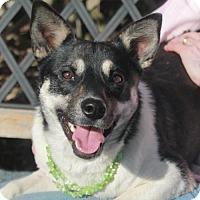Adopt A Pet :: Anika - Garfield Heights, OH