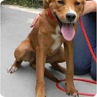 Adopt A Pet :: Annabelle - Alexandria, VA