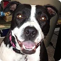 Adopt A Pet :: Lowry - Plano, TX