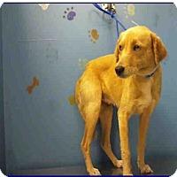 Adopt A Pet :: Francie - Denver, CO