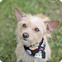 Adopt A Pet :: Zoie - Kingwood, TX