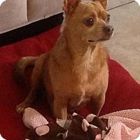 Adopt A Pet :: Dylan - Tavares, FL
