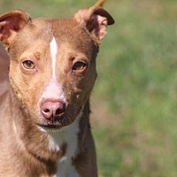 Adopt A Pet :: Mr. Peanut - McKenzie, TN