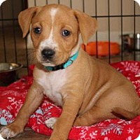 Adopt A Pet :: Rory - Charlotte, NC