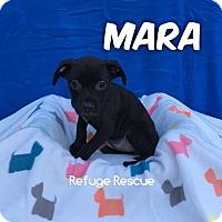Adopt A Pet :: MARA - Woodstock, GA