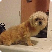 Adopt A Pet :: Lee - cupertino, CA