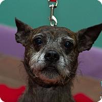 Adopt A Pet :: Puggie - Evansville, IN