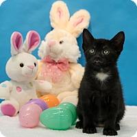 Adopt A Pet :: Puck - Houston, TX