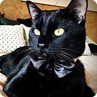 Adopt A Pet :: Onyx - Arlington/Ft Worth, TX