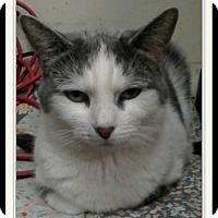 Adopt A Pet :: Bristol - Trevose, PA