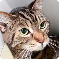Adopt A Pet :: EVIE - Camarillo, CA