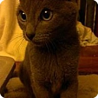 Adopt A Pet :: Steele - San Diego, CA