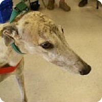 Adopt A Pet :: Dunkin - St Petersburg, FL