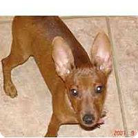 Adopt A Pet :: Rilee - Phoenix, AZ