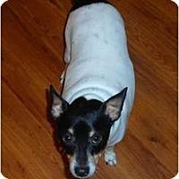 Adopt A Pet :: Piglet - Glen Burnie, MD