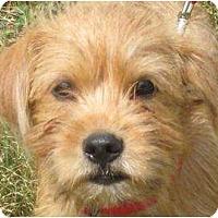 Adopt A Pet :: ROBIE - Essex Junction, VT