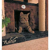 Adopt A Pet :: Adele - Olmsted Falls, OH