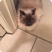 Adopt A Pet :: Gizzy - Monroe, NC