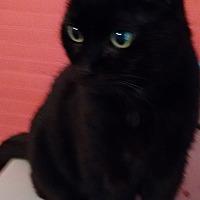 Adopt A Pet :: Morgan - Morganton, NC