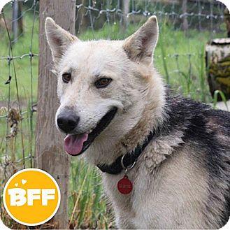 Shepherd (Unknown Type) Mix Dog for adoption in Edmonton, Alberta - Vincent Vega