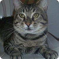 Adopt A Pet :: Fritz - Hamburg, NY
